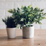 Organização, Plantas