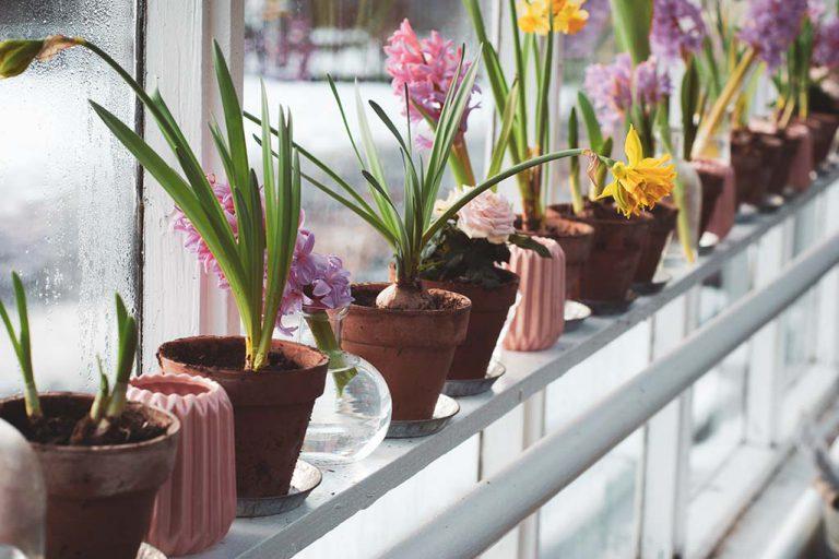O papel das plantas na organização da casa