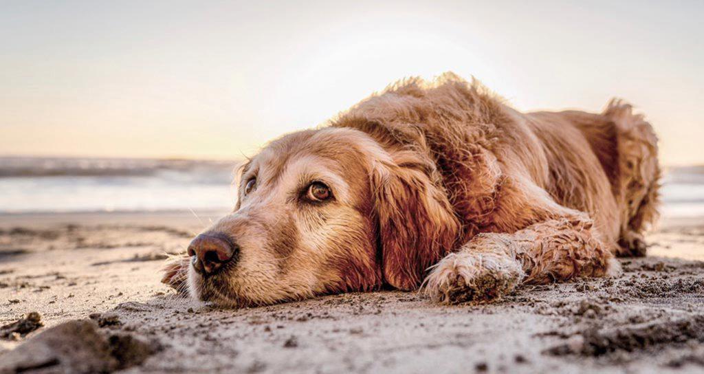 Cão deitado na areia da praia