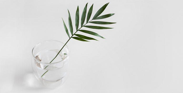 Folha num copo com água