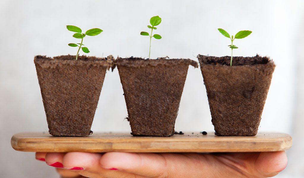 Três plantas pequenas