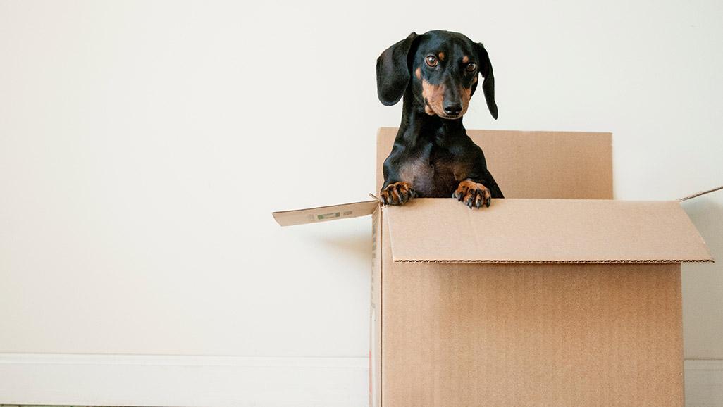Cão pequeno numa caixa de cartão